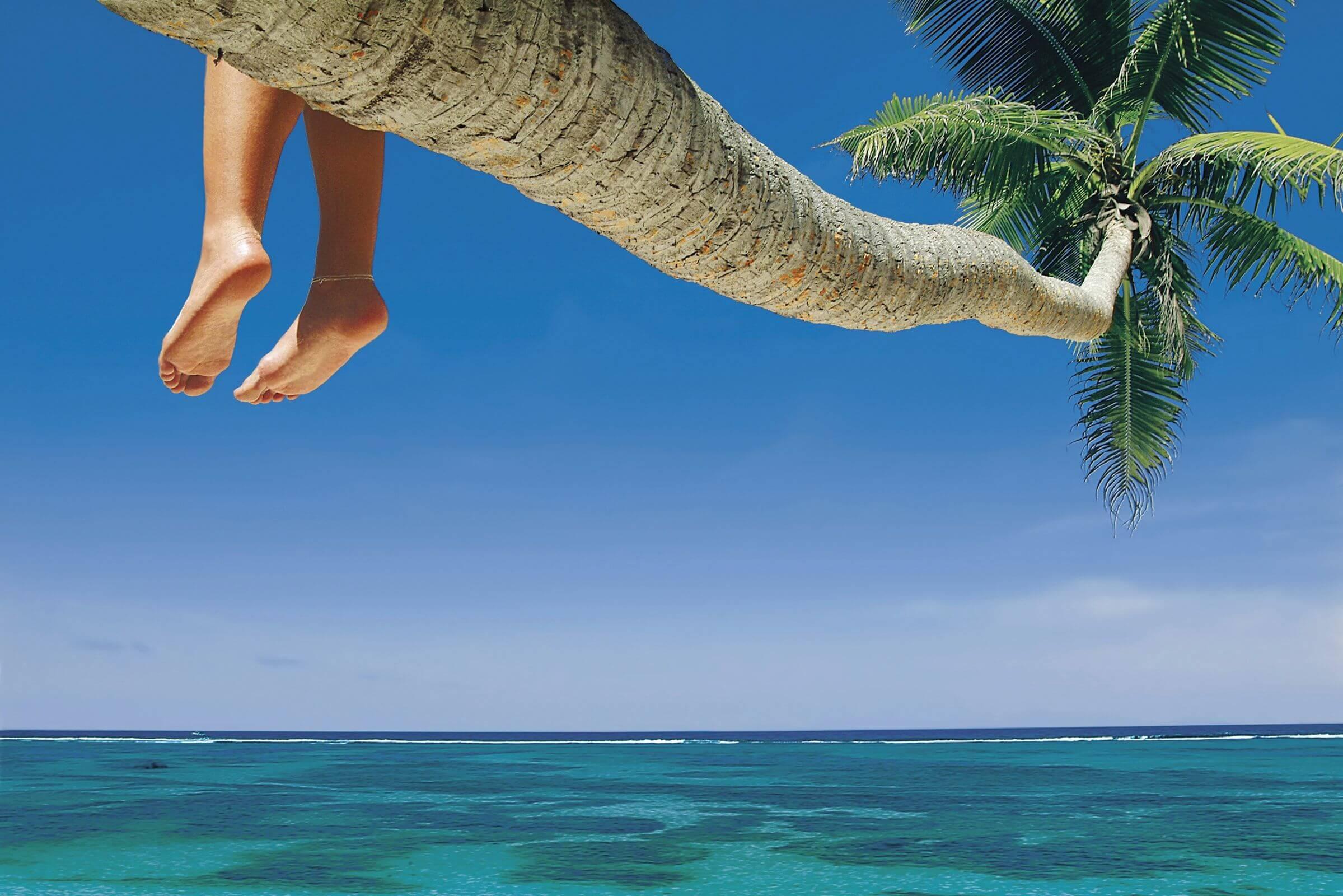 Feet Palm Tree Medium