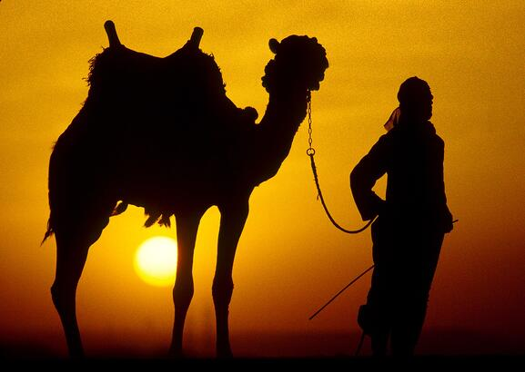 camel copy.jpg