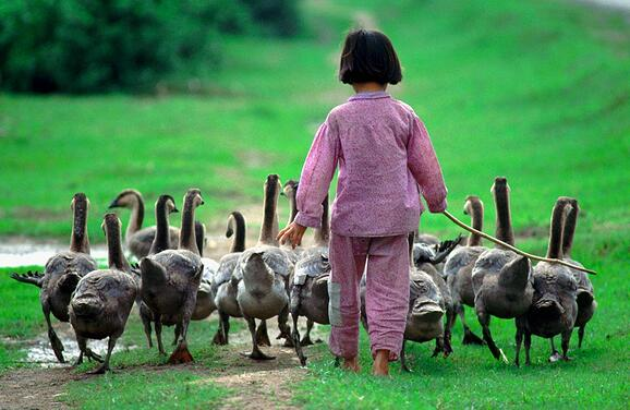 girl with geese for card p copy.jpg